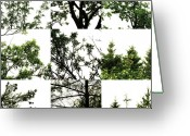 Robert C. Glover Jr Greeting Cards - Nature Scape 026 Greeting Card by Robert Glover