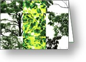 Robert C. Glover Jr Greeting Cards - Nature Scape 027 Greeting Card by Robert Glover