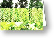 Robert C. Glover Jr Greeting Cards - Nature Scape 028 Greeting Card by Robert Glover