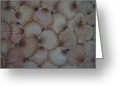 Seashell Art Greeting Cards - Natures Artistry Greeting Card by Rose Mary Gates