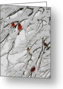 Red Birds Greeting Cards - Natures Christmas Ornaments Greeting Card by Shannon Story
