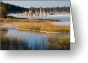 Kamloops Greeting Cards - Natures Frosting Greeting Card by Peter Olsen