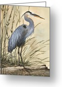 Herons Greeting Cards - Natures Harmony Greeting Card by James Williamson