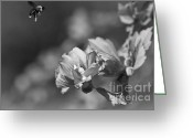 Black And White Photos Mixed Media Greeting Cards - Natures Part Greeting Card by Kim Henderson