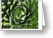 Arboretum Greeting Cards - Natures Patterns Greeting Card by Sandy Tracey