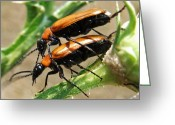 Greek Insects Greeting Cards - Natures Romance Greeting Card by Eric Kempson