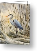 Heron Greeting Cards - Natures Wonder Greeting Card by James Williamson