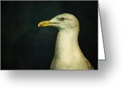 Seagull Photo Greeting Cards - Naujaq Greeting Card by Priska Wettstein