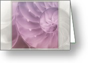Seashell Art Photo Greeting Cards - Nautilus Matted Greeting Card by Tom Mc Nemar