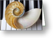 Pianos Greeting Cards - Nautilus shell on piano keys Greeting Card by Garry Gay