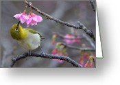 Fragility Greeting Cards - Nectar Greeting Card by Karen Walzer