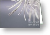 Tree Lines Greeting Cards - Neigerelle 02a Greeting Card by Variance Collections