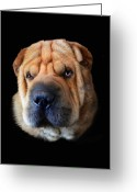 Dog Portrait Digital Art Greeting Cards - Nelson Greeting Card by Julie L Hoddinott