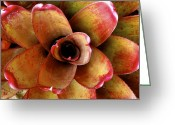 Bromeliad Greeting Cards - Neo Hula Lady Bromeliad Greeting Card by Karon Melillo DeVega