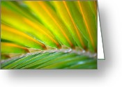 Plants Greeting Cards - Neon Palm Greeting Card by Kimberly Gonzales