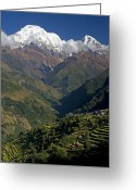 Terraces Greeting Cards - Nepal Annapurna Greeting Card by Walter Quirtmair