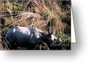 Elephant Ride Greeting Cards - Nepal Rhino in the Wild Greeting Card by First Star Art