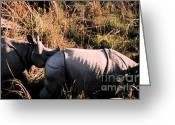 Elephant Ride Greeting Cards - Nepal Rhinos in the Wild Greeting Card by First Star Art
