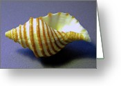 Skeletal Greeting Cards - Neptune Whelk Seashell Greeting Card by Frank Wilson