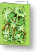 Decorative Floral Drawings Greeting Cards - Neptunes Flowers Greeting Card by Olena Kulyk