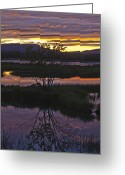 Roger Lewis Greeting Cards - Nerepis Marsh Sunset Greeting Card by Roger Lewis