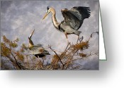 Herons Greeting Cards - Nesting Time Greeting Card by Debra and Dave Vanderlaan