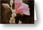Cottage Chic Greeting Cards - New Beginning Greeting Card by Julie Hamilton