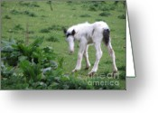 Irish Greeting Cards - New-born foal in the wild Irish countryside  Greeting Card by Joseph Doyle