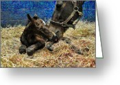 Terry Digital Art Greeting Cards - New born foal Greeting Card by Terry Sita