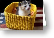 Whiskers Greeting Cards - New born kitten Greeting Card by Garry Gay
