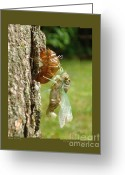 Cicadas Greeting Cards - New Cicada Greeting Card by Patricia Overmoyer
