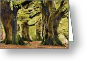 New Britain Greeting Cards - New Forest Greeting Card by Colin Varndell