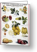 Guava Greeting Cards - NEW FRUITS, c1950s Greeting Card by Granger