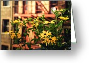 Black Eyed Susans Greeting Cards - New York City Flowers Along the High Line Park Greeting Card by Vivienne Gucwa
