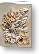 Shells Mixed Media Greeting Cards - New Zealand Opus 02 Greeting Card by Carol Zee