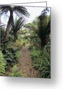New Britain Greeting Cards - New Zealand Walk At Heligan Gardens Greeting Card by Adrian Thomas