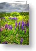 Stormy Sky Greeting Cards - Newfoundland meadow Greeting Card by Elena Elisseeva
