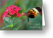 Etherial Greeting Cards - Nice Numata Butterfly Greeting Card by Sabrina L Ryan