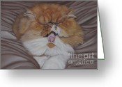 Animalportrait Pastels Greeting Cards - Nico - lazy cat Greeting Card by Sabine Lackner