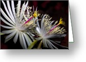 Unique Flowers Greeting Cards - Night Bloomer Greeting Card by Kelley King