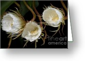 Night Blooming Greeting Cards - Night-Blooming Cereus 0c Greeting Card by Warren Sarle