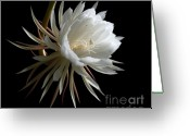 Night Blooming Greeting Cards - Night-Blooming Cereus 1 Greeting Card by Warren Sarle