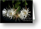 Night Blooming Greeting Cards - Night-Blooming Cereus 4 Greeting Card by Warren Sarle