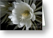 Night Blooming Greeting Cards - Night-Blooming Cereus Deep 1 Greeting Card by Warren Sarle