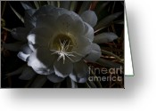 Night Blooming Greeting Cards - Night-Blooming Cereus Deep 2 Greeting Card by Warren Sarle
