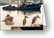 Gameroom Greeting Cards - Night Herons Portland Maine Greeting Card by Bob Orsillo