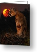 Puma Greeting Cards - Night of the Cougar Greeting Card by Wade Aiken