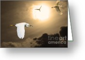 Migrating Bird Greeting Cards - Night of The White Egrets . Partial Sepia Greeting Card by Wingsdomain Art and Photography