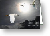 Migrating Bird Greeting Cards - Night of The White Egrets Greeting Card by Wingsdomain Art and Photography