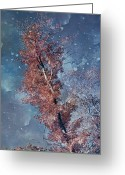 Autumn Photographs Greeting Cards - Nighty Tree Greeting Card by Aimelle